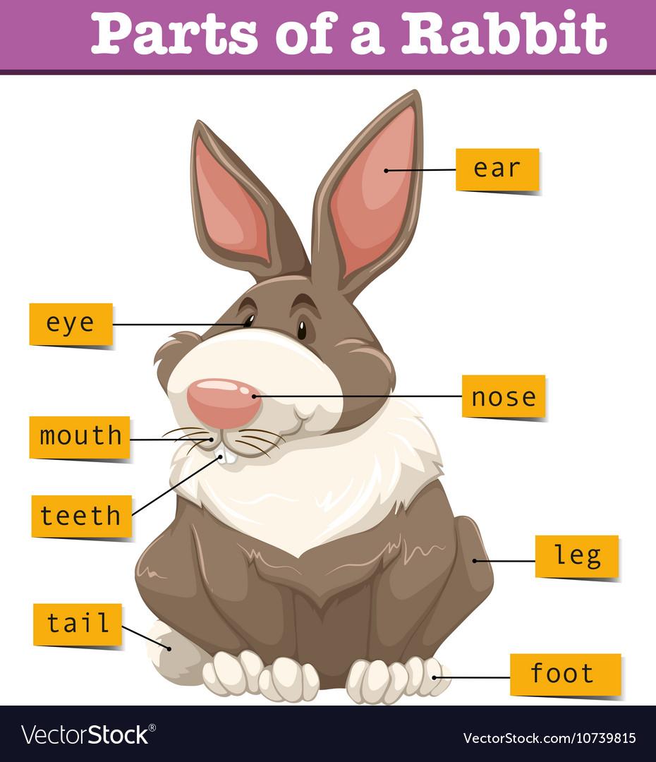 Rabbit Ear Diagram - Car Fuse Box Wiring Diagram •