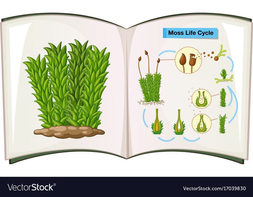 Book showing life cycle of moss vector image
