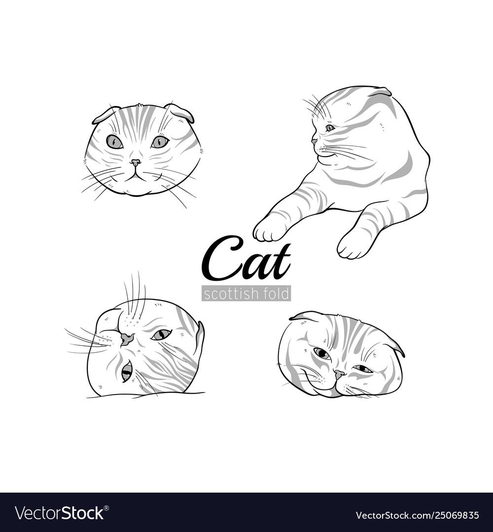 Set cats scottish fold