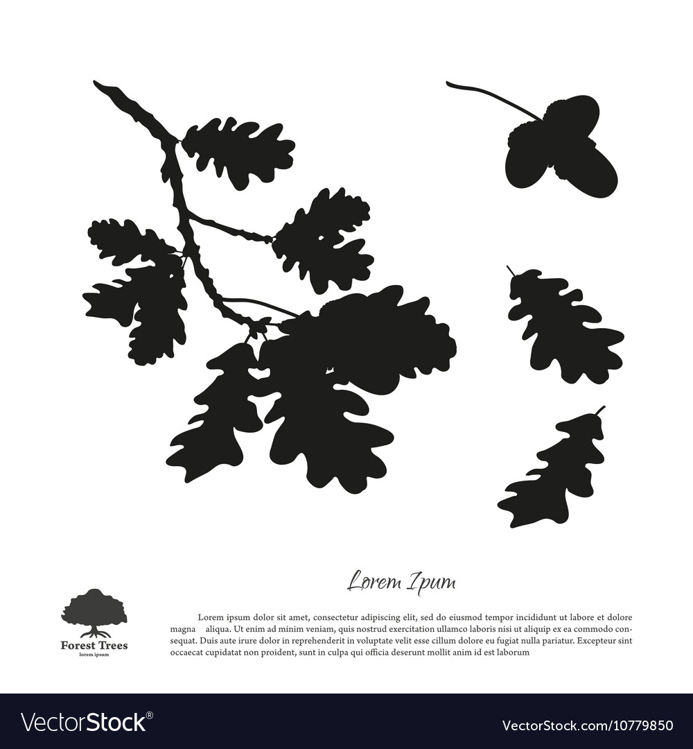 Black silhouette of the oak branch vector image