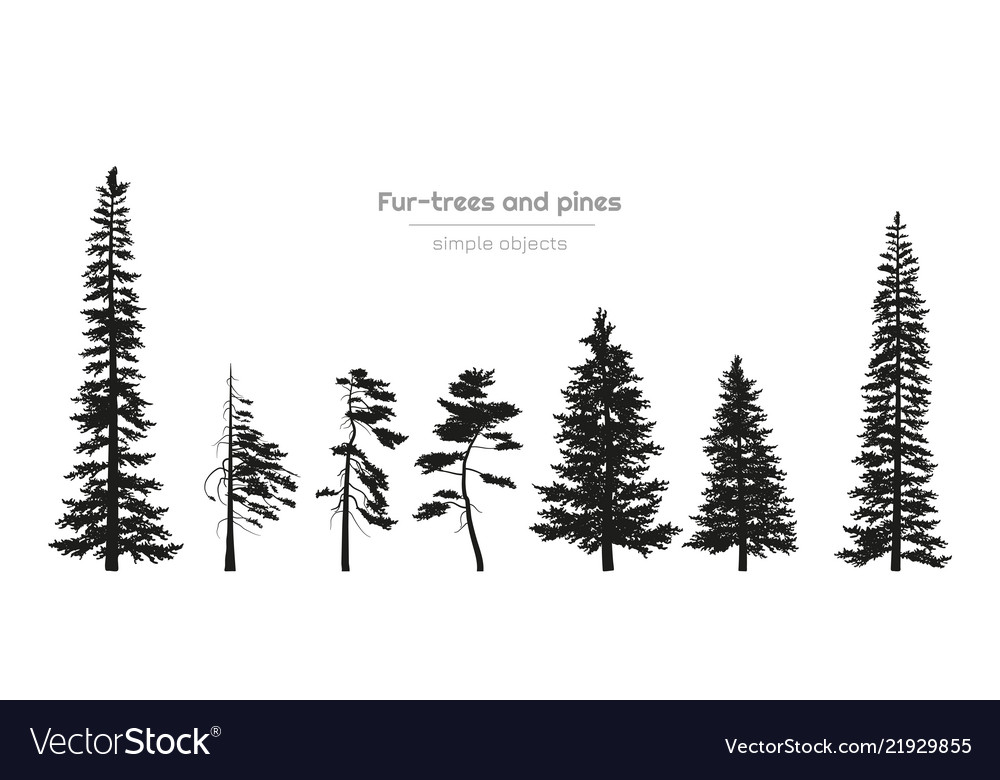 Black silhouettes fur-trees and pines