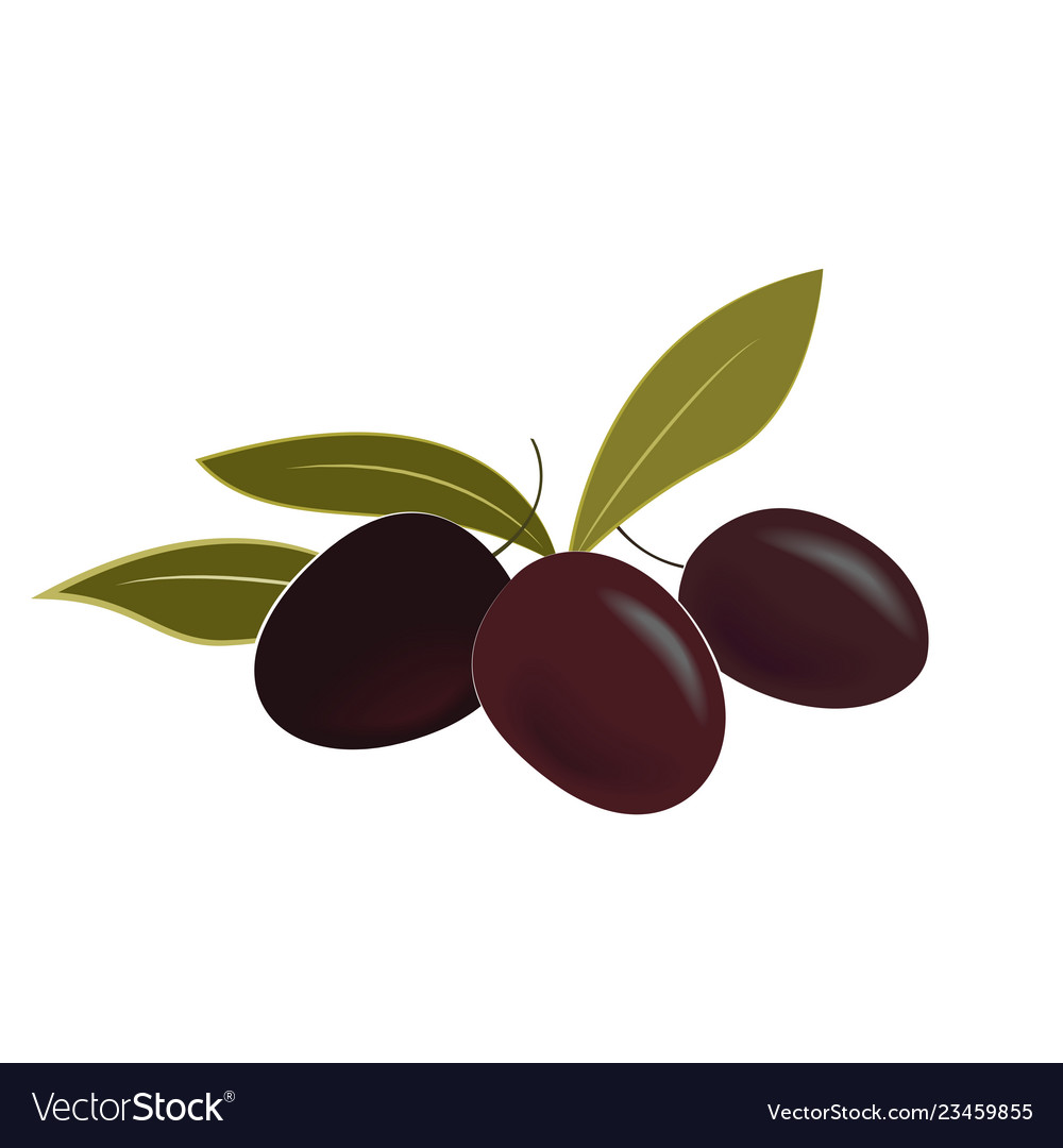 Ripe olives and leaves