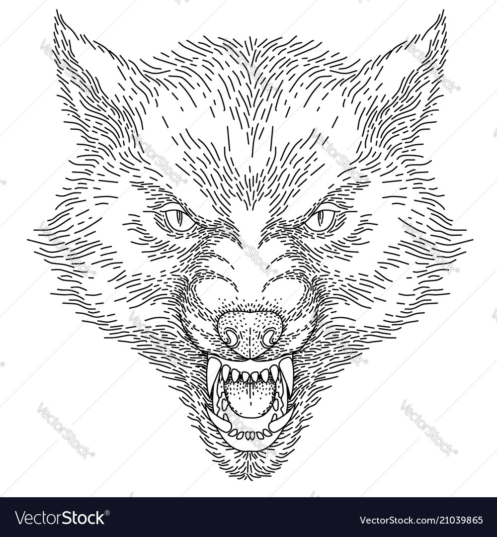 Head of roaring wolf vector image