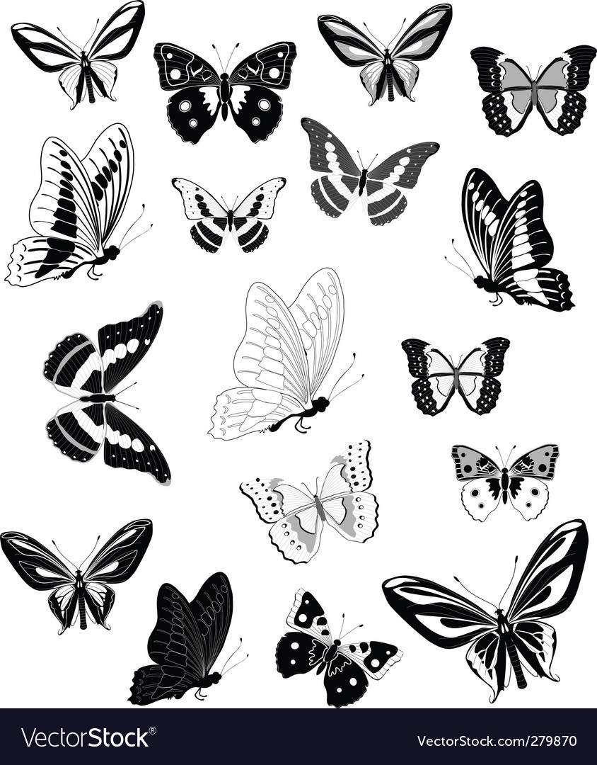 butterfly royalty free vector image vectorstock rh vectorstock com butterfly vector images butterfly vector with swirl