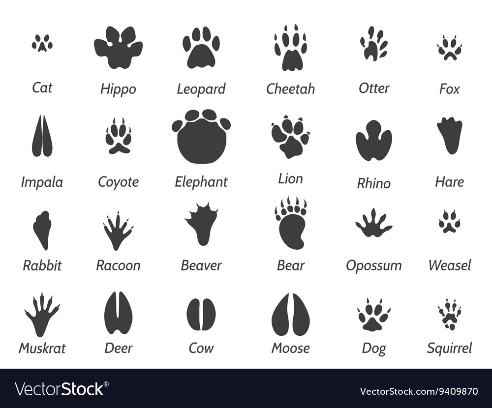 Wildlife animals footprints vector image