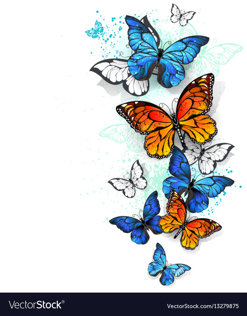 Flying butterflies morpho and monarch