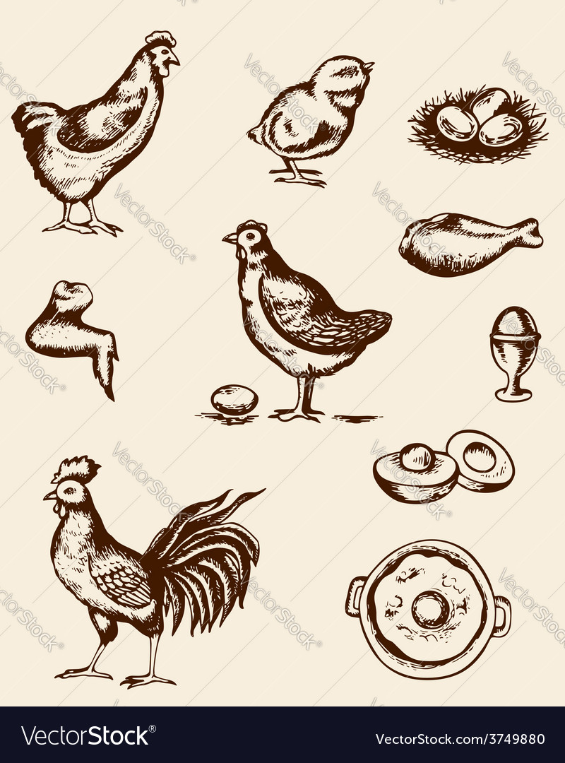Vintage hand drawn chickens and eggs vector image