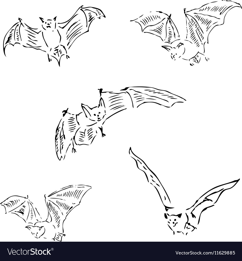 Bats in different positions pencil sketch by hand