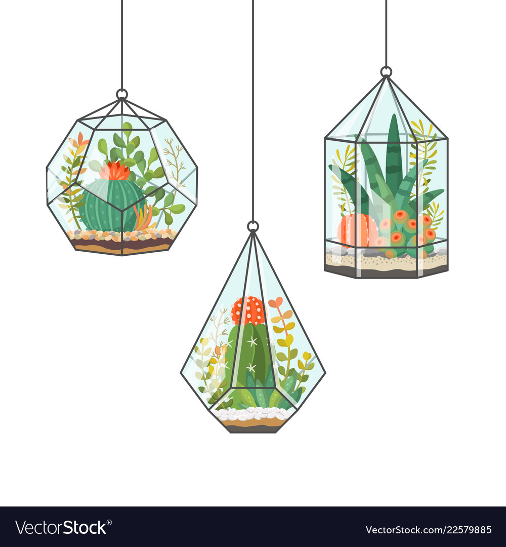 Tropical house plants and cactus in hanging