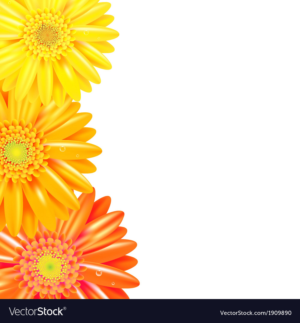 Yellow And Orange Gerbers Border Royalty Free Vector Image