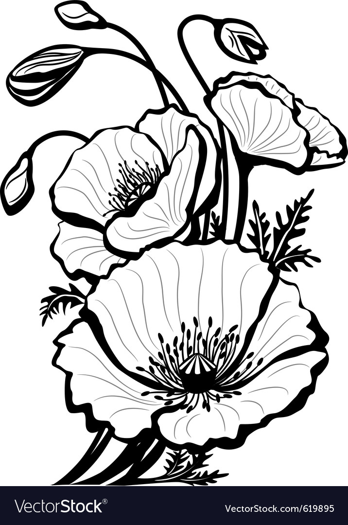 Sketch of poppy flowers