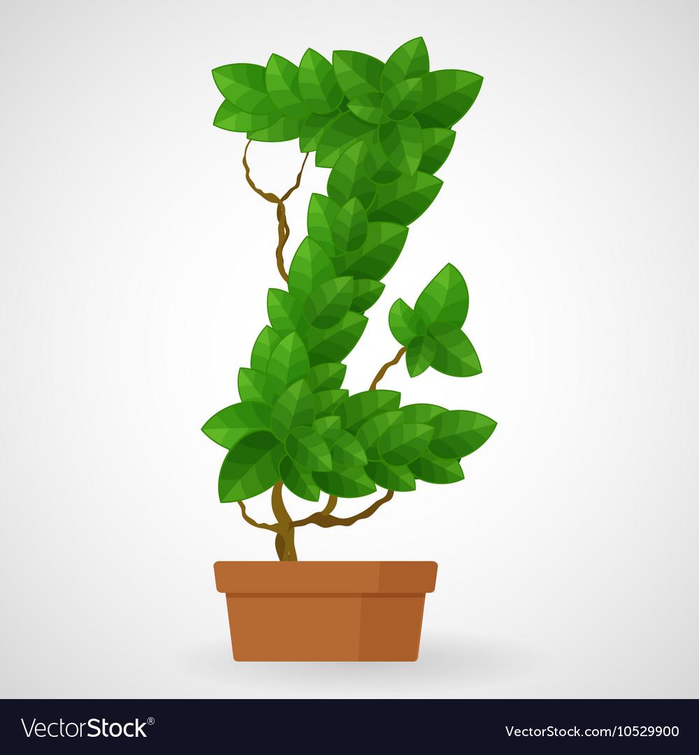 Green foliage houseplant alphabet