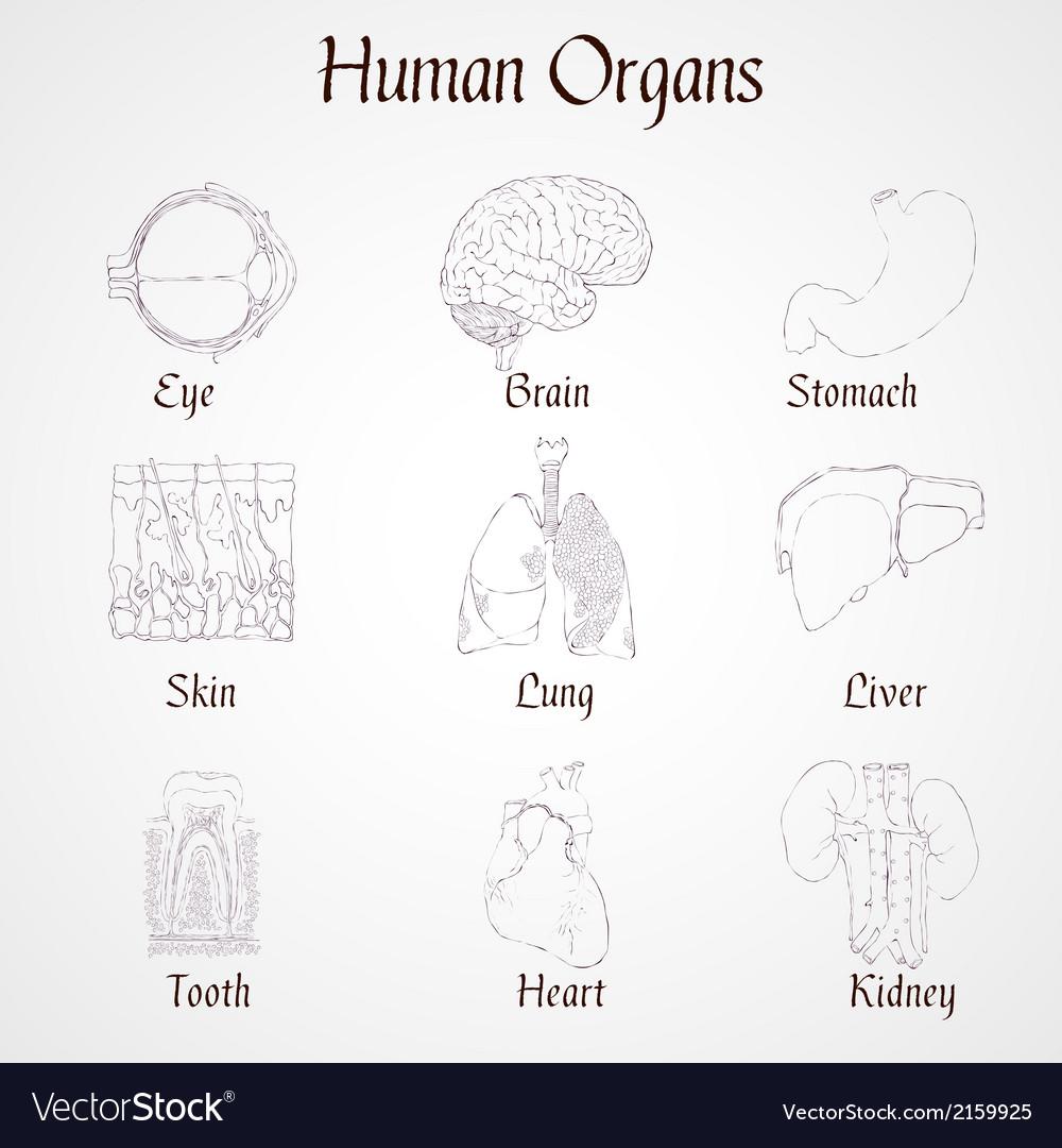 Human Organs Icons Royalty Free Vector Image Vectorstock Torso Diagram
