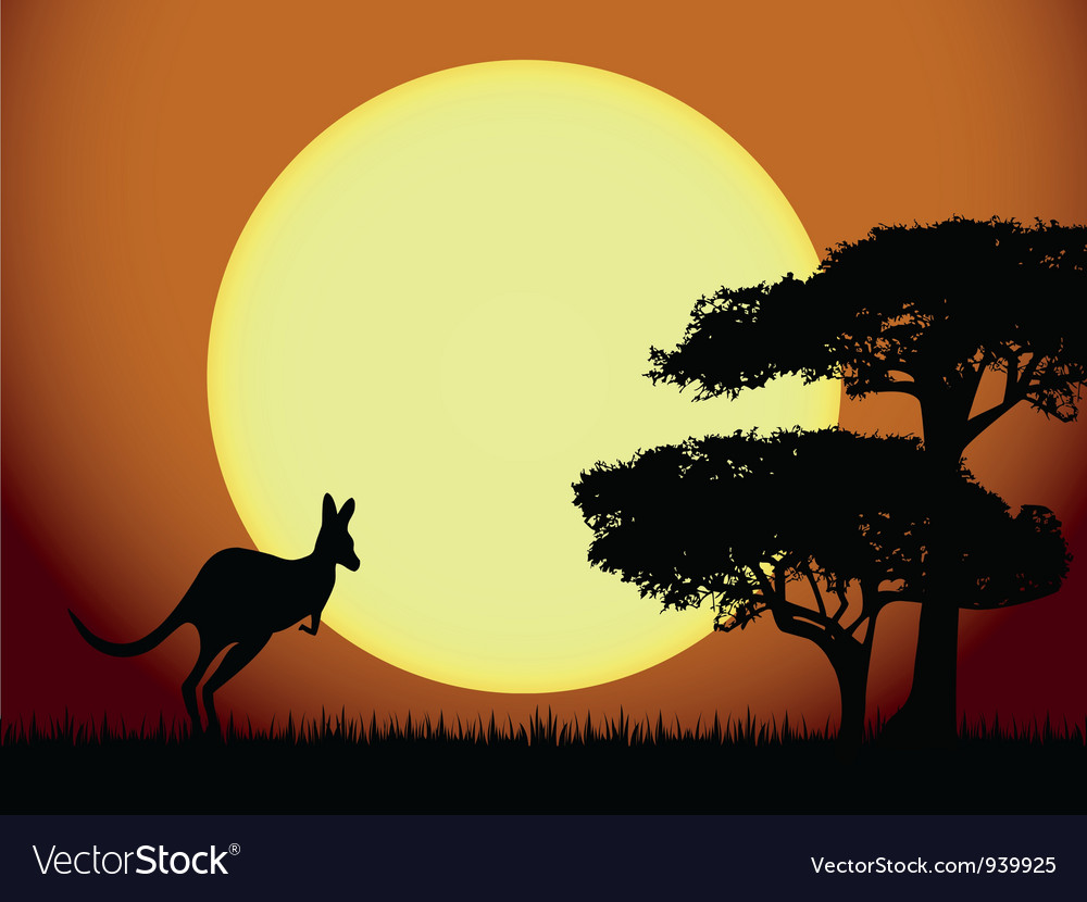 Kangaroo at sunset vector image
