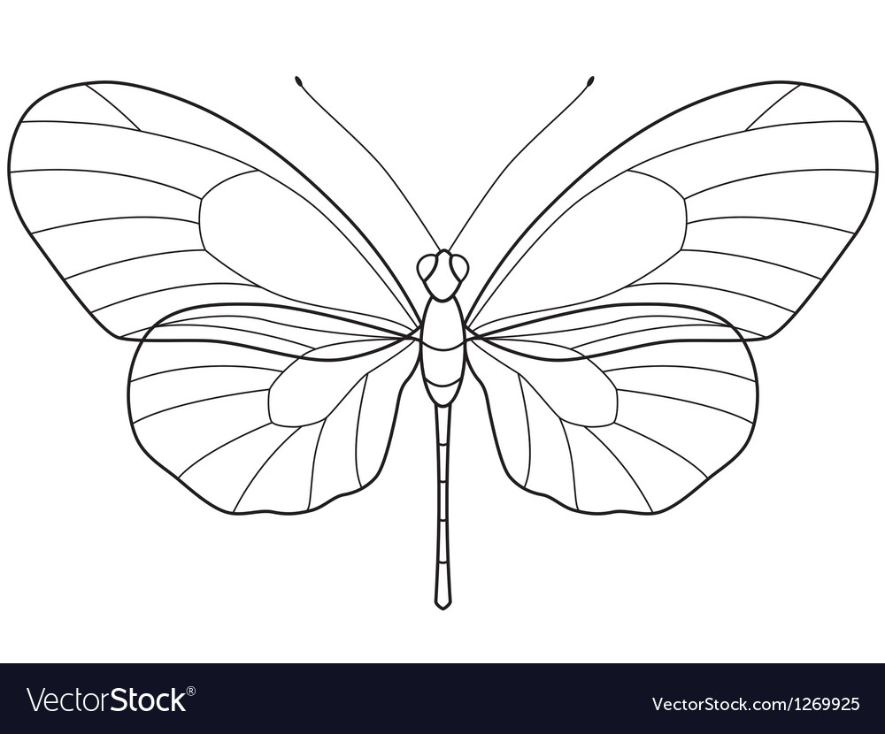outline butterfly vector image