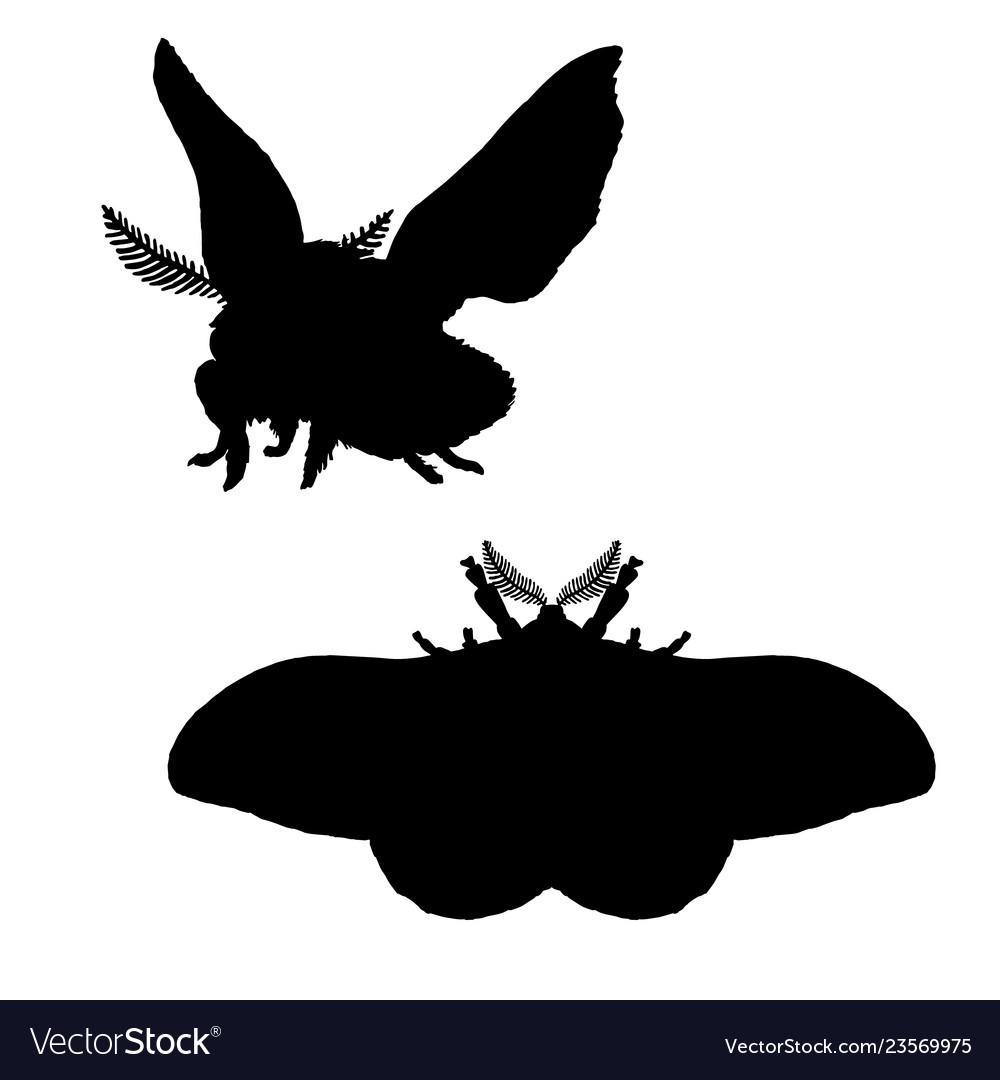 Moth silhouette black white icon bloodworm