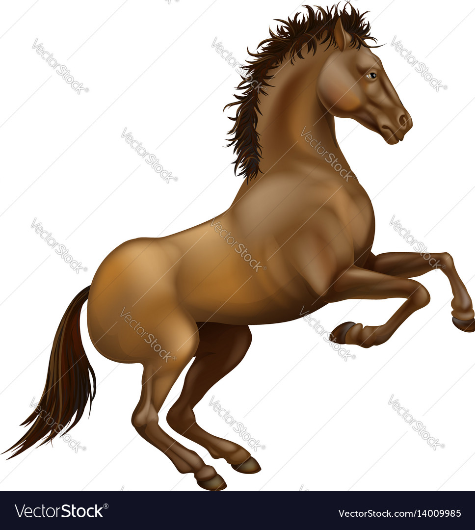 Rearing brown horse vector image