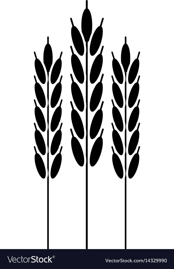Harvesting wheat ears pictogram vector image