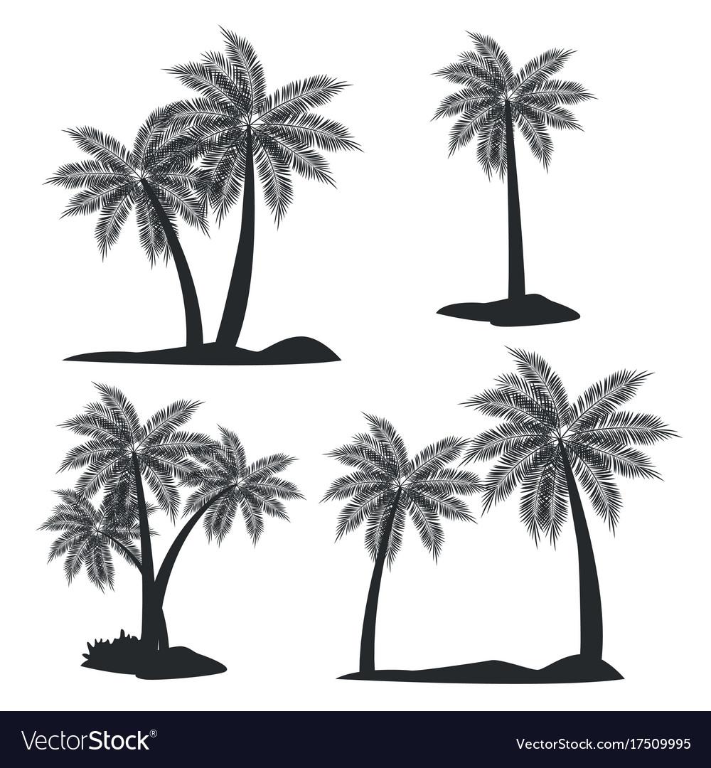 Beach tree palms vector image