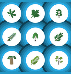 Flat icon nature set of leaves acacia leaf vector
