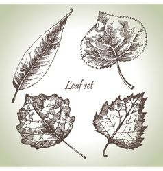 Hand drawn leaf set vector