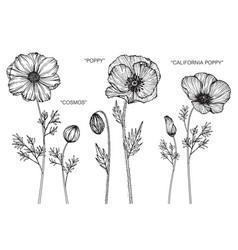 Set cosmos poppy california poppy flower and vector