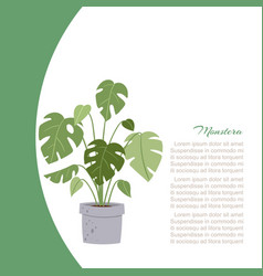 monstera interior home plant tree in pot vector image