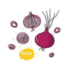 onion hand drawn in the style vector image