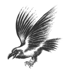 Raven Sketch vector image
