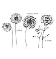 Set cosmos chrysanthemum carnation flower and vector