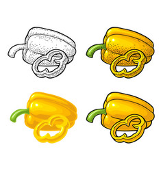 sweet bell pepper vintage engraved and vector image