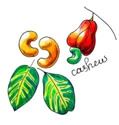 cashew vector image