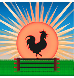 cock on the background of sunrise vector image