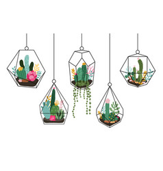 doodle hanging terrarium succulents and cactuses vector image