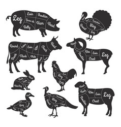 For butcher shop cutting lines vector