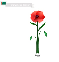 Red Poppy The Popular Flower of Turkmenistan vector image