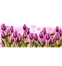 pink tulips spring background watercolor vector image
