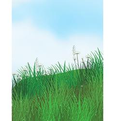 Grassland vector