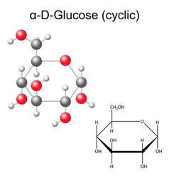 Structural chemical formula and model of glucose vector image vector image
