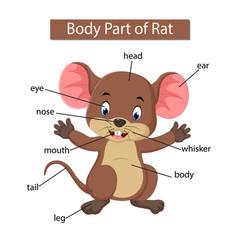 Diagram showing body part rat vector