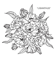 lisianthus flower and leaf hand drawn botanical vector image