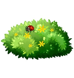 Nature design with bush and bug vector
