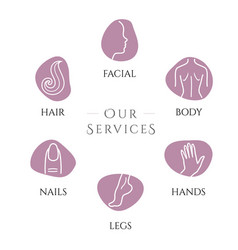 spa services vector image