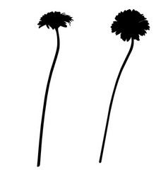 two gerbera silhouettes vector image vector image