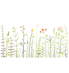 Wild Field Flowers and Grass on White Collection vector image