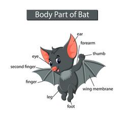 Diagram showing body part bat vector