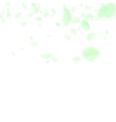 Green flower petals falling down splendid romanti vector