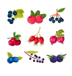 Juicy Colorful Berry Set vector