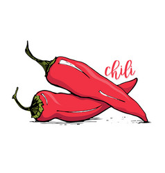 Red chilli pepper sketch style vector