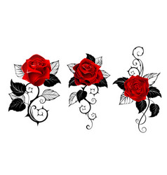 three red roses for tattoo vector image